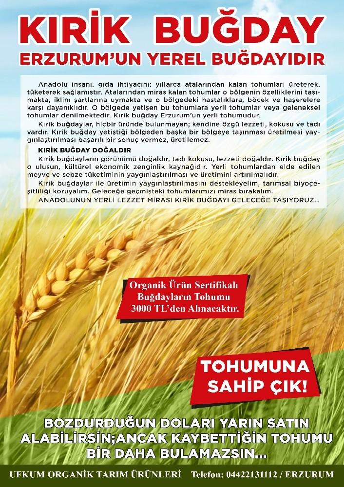 Ilıcalı'dan Kırik buğday üretiminin yaygınlaştırılması çağrısı