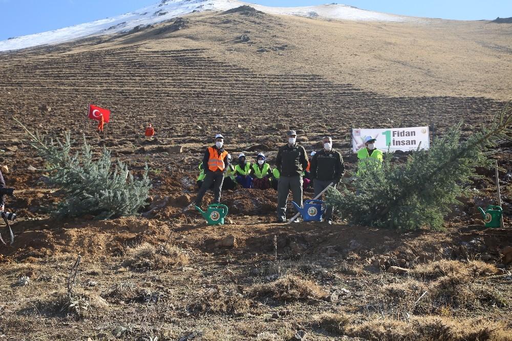 Palandöken Kayak Merkezi ağaçlandırılıyor
