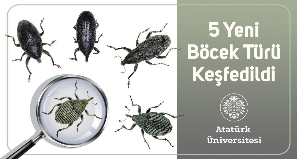 5 yeni böcek türü keşfedildi
